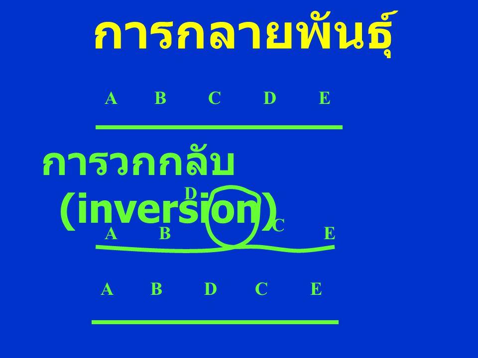 การกลายพันธุ์ การวกกลับ (inversion) A B C D E A B C D E A B D C E