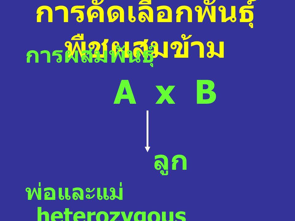 การคัดเลือกพันธุ์ พืชผสมข้าม การผสมพันธุ์ A x B ลูก พ่อและแม่ heterozygous