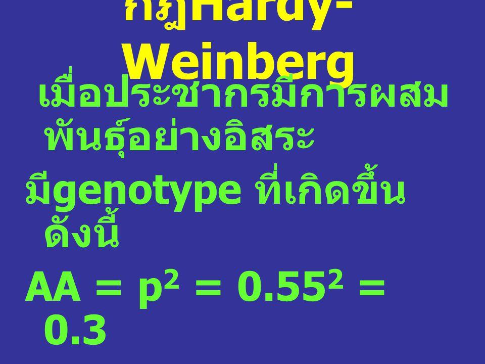กฎ Hardy- Weinberg เมื่อประชากรมีการผสม พันธุ์อย่างอิสระ มี genotype ที่เกิดขึ้น ดังนี้ AA = p 2 = 0.55 2 = 0.3 Aa = 2pq = 2(0.55 x 0.45) = 0.5 aa = q