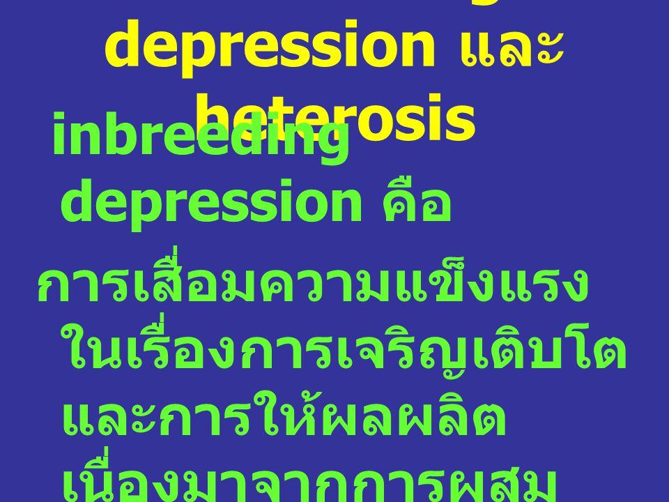 Inbreeding depression และ heterosis inbreeding depression คือ การเสื่อมความแข็งแรง ในเรื่องการเจริญเติบโต และการให้ผลผลิต เนื่องมาจากการผสม ตัวเองหรือ