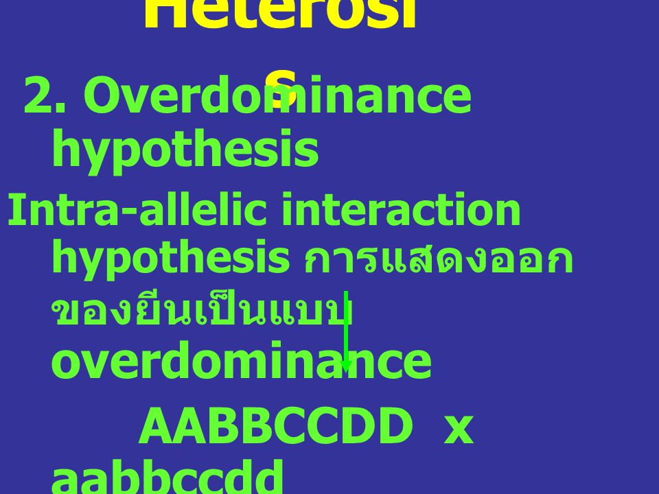 Heterosi s 2. Overdominance hypothesis Intra-allelic interaction hypothesis การแสดงออก ของยีนเป็นแบบ overdominance AABBCCDD x aabbccdd AaBbCcDd