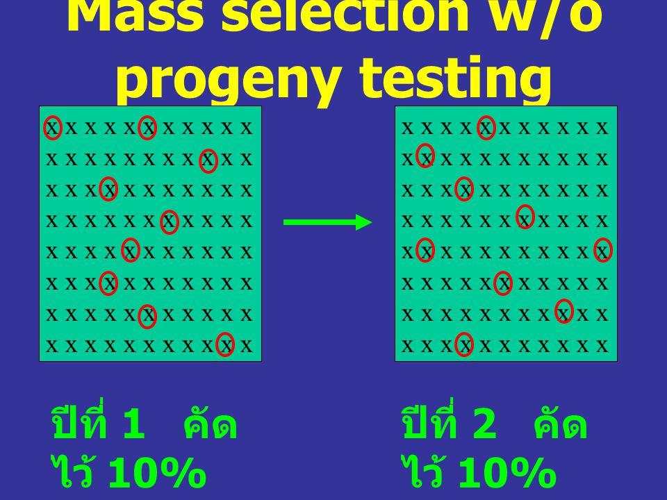 Mass selection w/o progeny testing x x x x x x x x x x x x x x x x x x x x x x x x x x x x x x x x x x x x x x x x x x x x ปีที่ 1 คัด ไว้ 10% ปีที่ 2