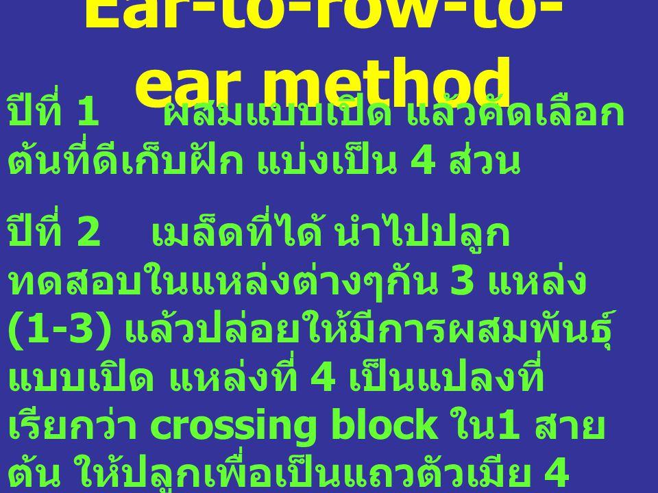 Ear-to-row-to- ear method ปีที่ 1 ผสมแบบเปิด แล้วคัดเลือก ต้นที่ดีเก็บฝัก แบ่งเป็น 4 ส่วน ปีที่ 2 เมล็ดที่ได้ นำไปปลูก ทดสอบในแหล่งต่างๆกัน 3 แหล่ง (1