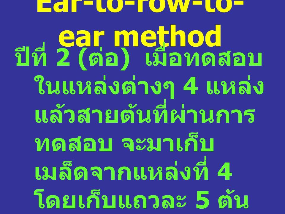 Ear-to-row-to- ear method ปีที่ 2 ( ต่อ ) เมื่อทดสอบ ในแหล่งต่างๆ 4 แหล่ง แล้วสายต้นที่ผ่านการ ทดสอบ จะมาเก็บ เมล็ดจากแหล่งที่ 4 โดยเก็บแถวละ 5 ต้น นำ