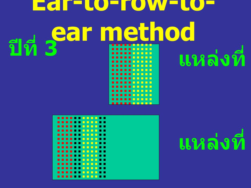 Ear-to-row-to- ear method ปีที่ 3 แหล่งที่ 1-3 แหล่งที่ 4