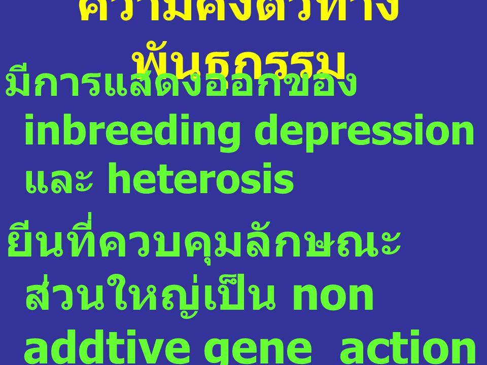 ความคงตัวทาง พันธุกรรม มีการแสดงออกของ inbreeding depression และ heterosis ยีนที่ควบคุมลักษณะ ส่วนใหญ่เป็น non addtive gene action