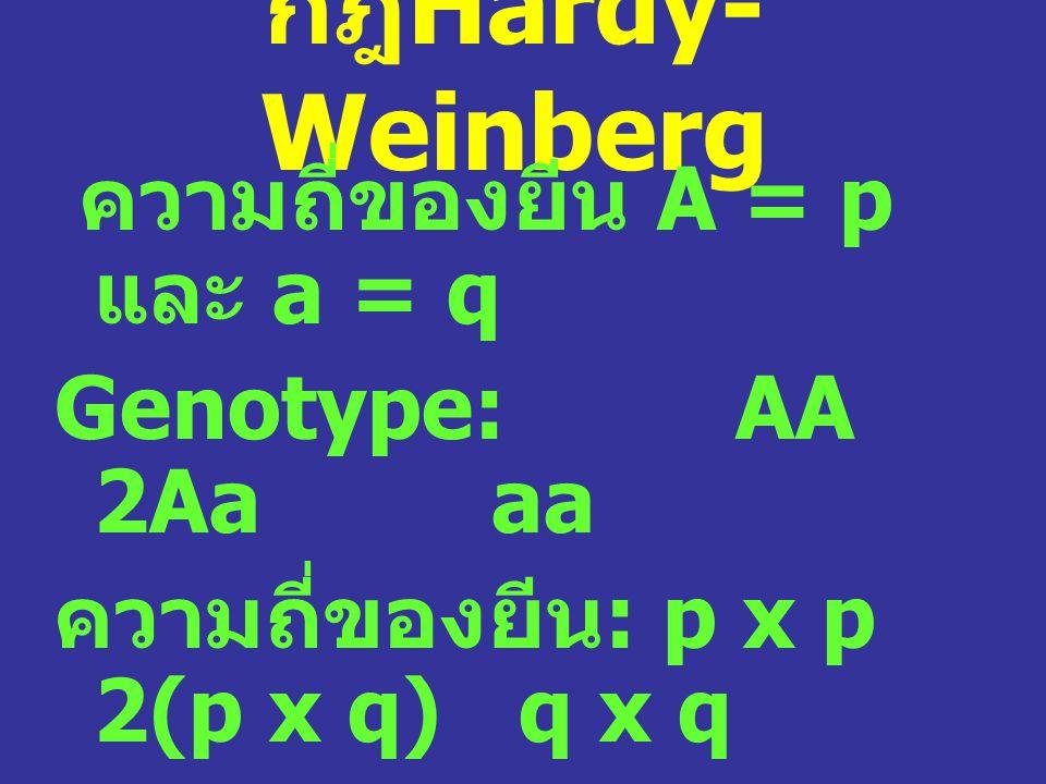 กฎ Hardy- Weinberg ความถี่ของยีน A = p และ a = q Genotype: AA 2Aa aa ความถี่ของยีน : p x p 2(p x q) q x q p 2 2pq q 2 ความถี่รวม = 1: p 2 + 2pq +q 2