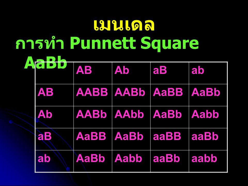 เมนเดล การทำ Punnett Square AaBb ABAbaBab ABAABBAABbAaBBAaBb AbAABbAAbbAaBbAabb aBAaBBAaBbaaBBaaBb abAaBbAabbaaBbaabb