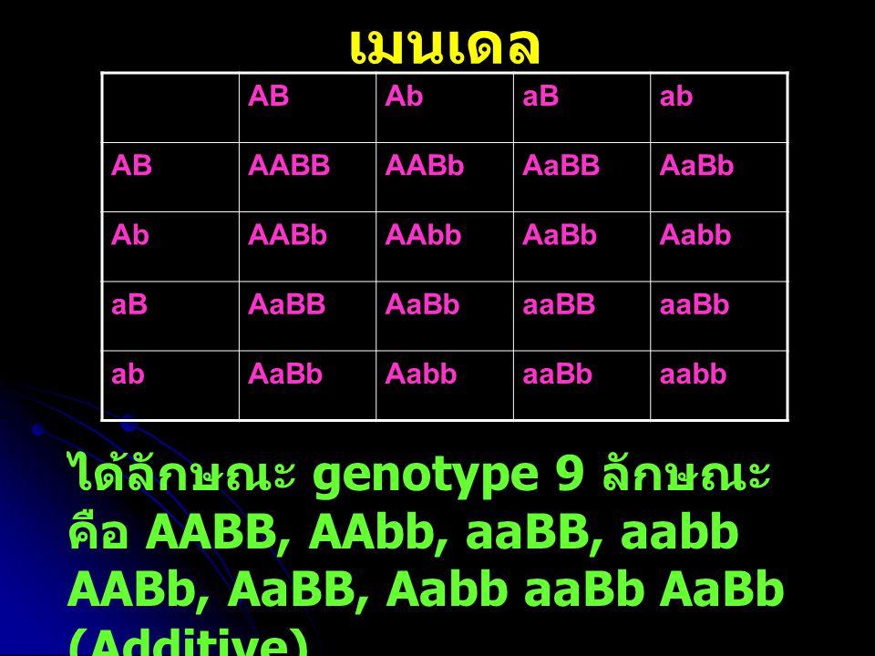 เมนเดล ABAbaBab ABAABBAABbAaBBAaBb AbAABbAAbbAaBbAabb aBAaBBAaBbaaBBaaBb abAaBbAabbaaBbaabb ได้ลักษณะ genotype 9 ลักษณะ คือ AABB, AAbb, aaBB, aabb AAB