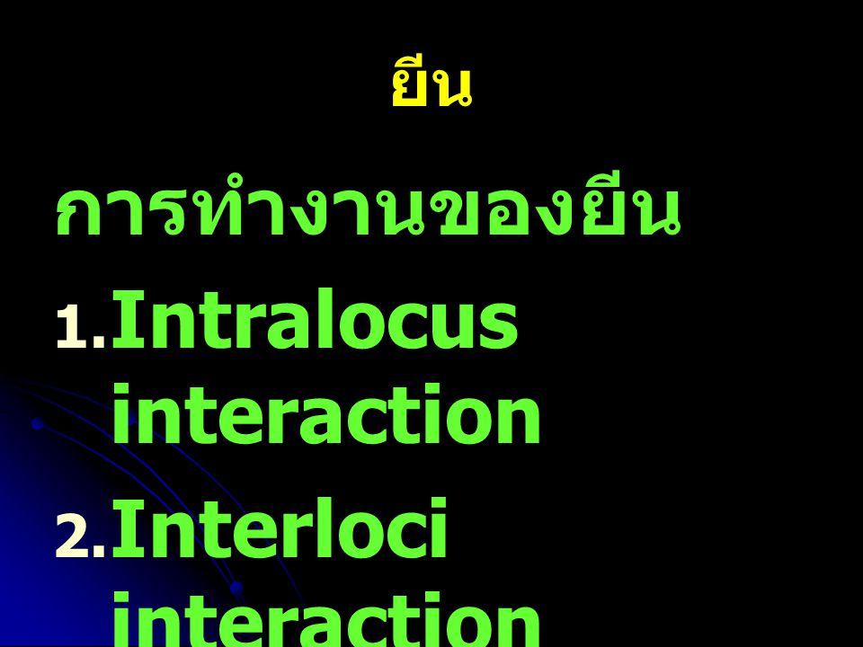 ยีน การทำงานของยีน   Intralocus interaction   Interloci interaction