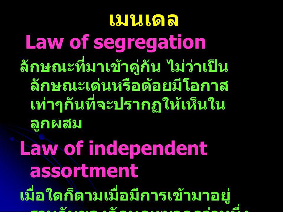 เมนเดล Law of segregation ลักษณะที่มาเข้าคู่กัน ไม่ว่าเป็น ลักษณะเด่นหรือด้อยมีโอกาส เท่าๆกันที่จะปรากฏให้เห็นใน ลูกผสม Law of independent assortment