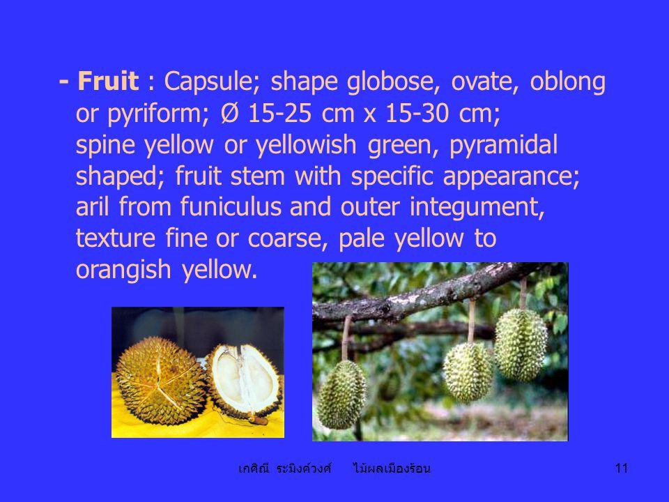 เกศิณี ระมิงค์วงศ์ ไม้ผลเมืองร้อน 11 - Fruit : Capsule; shape globose, ovate, oblong or pyriform; Ø 15-25 cm x 15-30 cm; spine yellow or yellowish gre