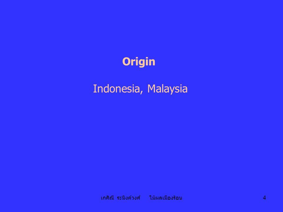 เกศิณี ระมิงค์วงศ์ ไม้ผลเมืองร้อน 4 Origin Indonesia, Malaysia