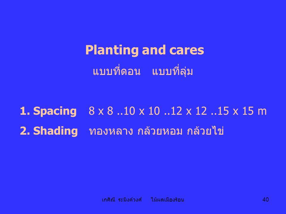 เกศิณี ระมิงค์วงศ์ ไม้ผลเมืองร้อน 40 Planting and cares แบบที่ดอน แบบที่ลุ่ม 1. Spacing 8 x 8..10 x 10..12 x 12..15 x 15 m 2. Shadingทองหลาง กล้วยหอม