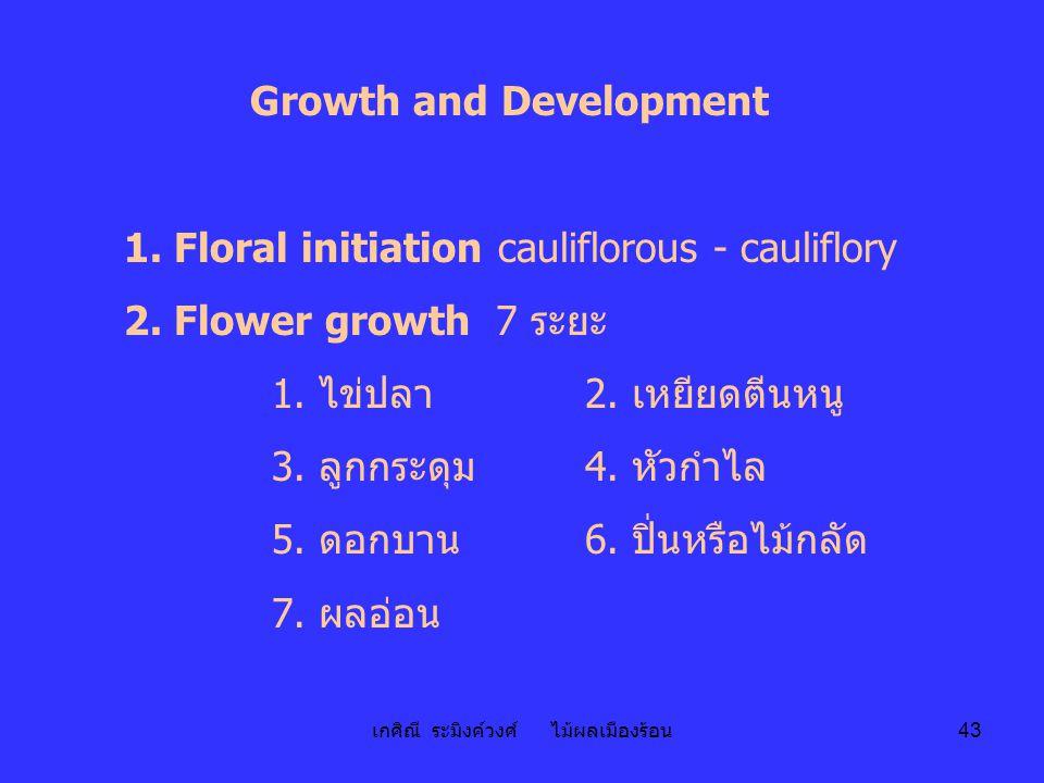 เกศิณี ระมิงค์วงศ์ ไม้ผลเมืองร้อน 43 Growth and Development 1. Floral initiation cauliflorous - cauliflory 2. Flower growth 7 ระยะ 1. ไข่ปลา 2. เหยียด