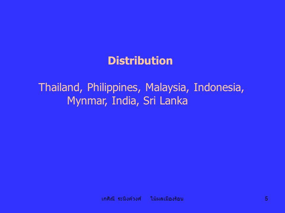 เกศิณี ระมิงค์วงศ์ ไม้ผลเมืองร้อน 5 Distribution Thailand, Philippines, Malaysia, Indonesia, Mynmar, India, Sri Lanka