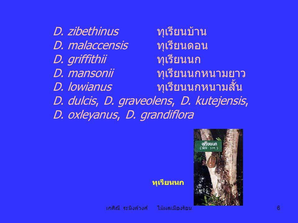 เกศิณี ระมิงค์วงศ์ ไม้ผลเมืองร้อน 6 D. zibethinus ทุเรียนบ้าน D. malaccensis ทุเรียนดอน D. griffithii ทุเรียนนก D. mansonii ทุเรียนนกหนามยาว D. lowian