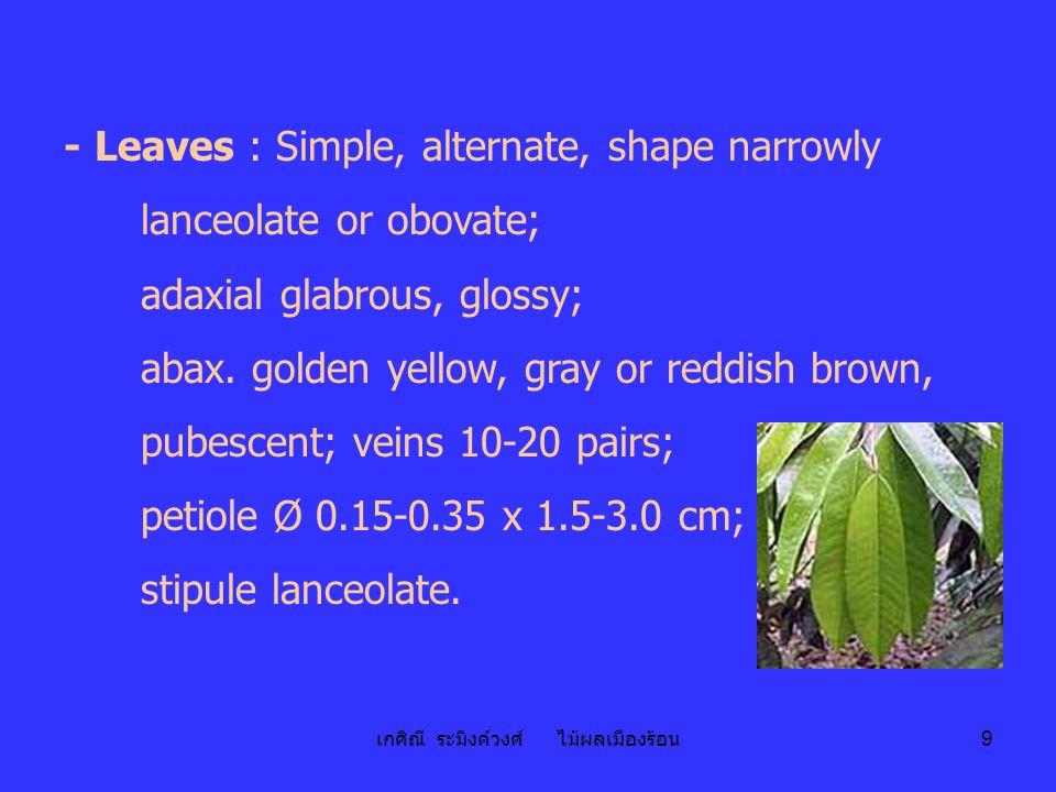 เกศิณี ระมิงค์วงศ์ ไม้ผลเมืองร้อน 10 - Flower : Solitary or in cluster of 3-30 flowered;Ø 5.0-7.5 cm, drooping.
