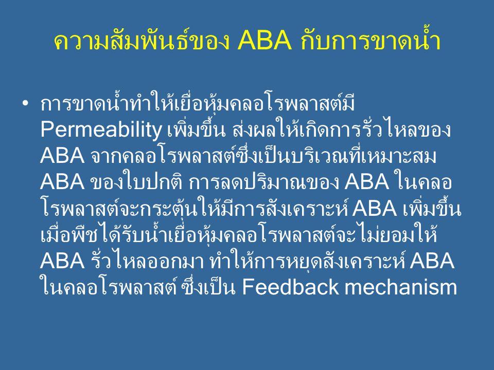 ความสัมพันธ์ของ ABA กับการขาดน้ำ การขาดน้ำทำให้เยื่อหุ้มคลอโรพลาสต์มี Permeability เพิ่มขึ้น ส่งผลให้เกิดการรั่วไหลของ ABA จากคลอโรพลาสต์ซึ่งเป็นบริเว
