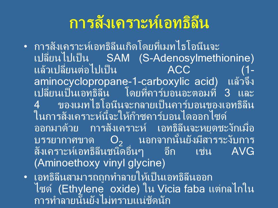 การสังเคราะห์เอทธิลีน การสังเคราะห์เอทธิลีนเกิดโดยที่เมทไธโอนีนจะ เปลี่ยนไปเป็น SAM (S-Adenosylmethionine) แล้วเปลี่ยนต่อไปเป็น ACC (1- aminocycloprop