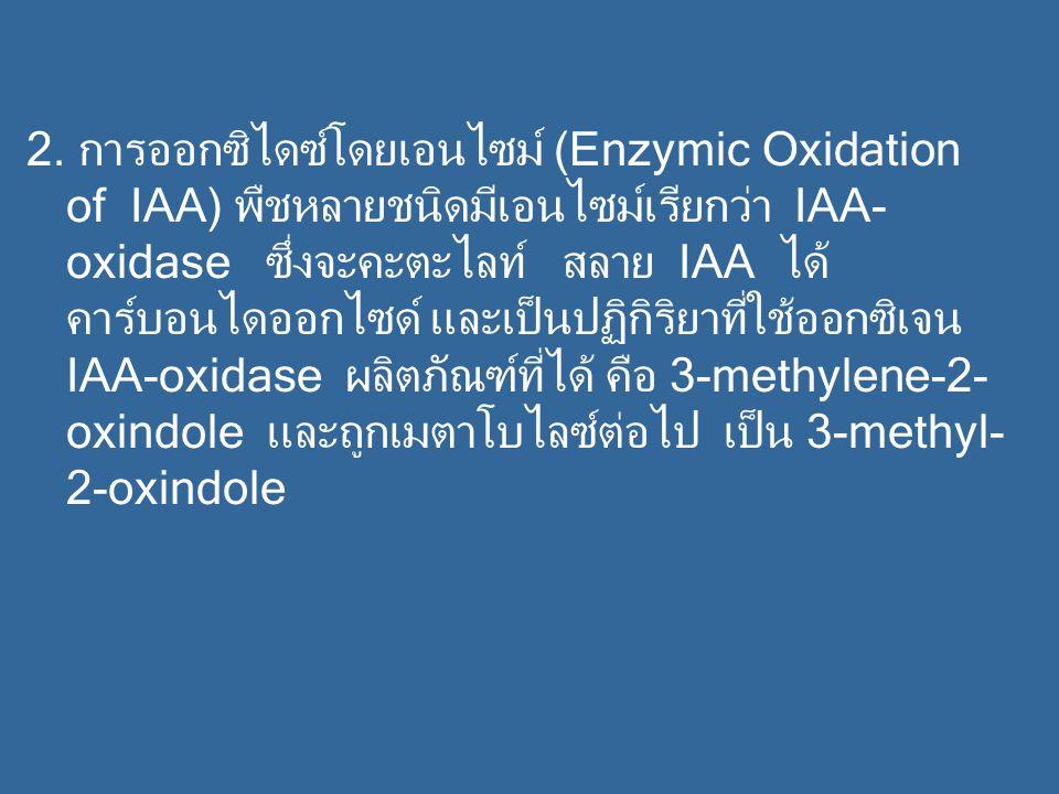 2. การออกซิไดซ์โดยเอนไซม์ (Enzymic Oxidation of IAA) พืชหลายชนิดมีเอนไซม์เรียกว่า IAA- oxidase ซึ่งจะคะตะไลท์ สลาย IAA ได้ คาร์บอนไดออกไซด์ และเป็นปฏิ