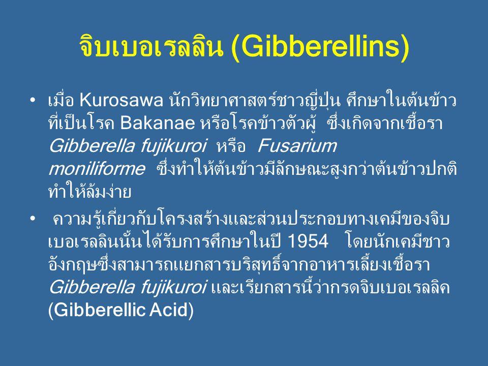 จิบเบอเรลลิน (Gibberellins) เมื่อ Kurosawa นักวิทยาศาสตร์ชาวญี่ปุ่น ศึกษาในต้นข้าว ที่เป็นโรค Bakanae หรือโรคข้าวตัวผู้ ซึ่งเกิดจากเชื้อรา Gibberella