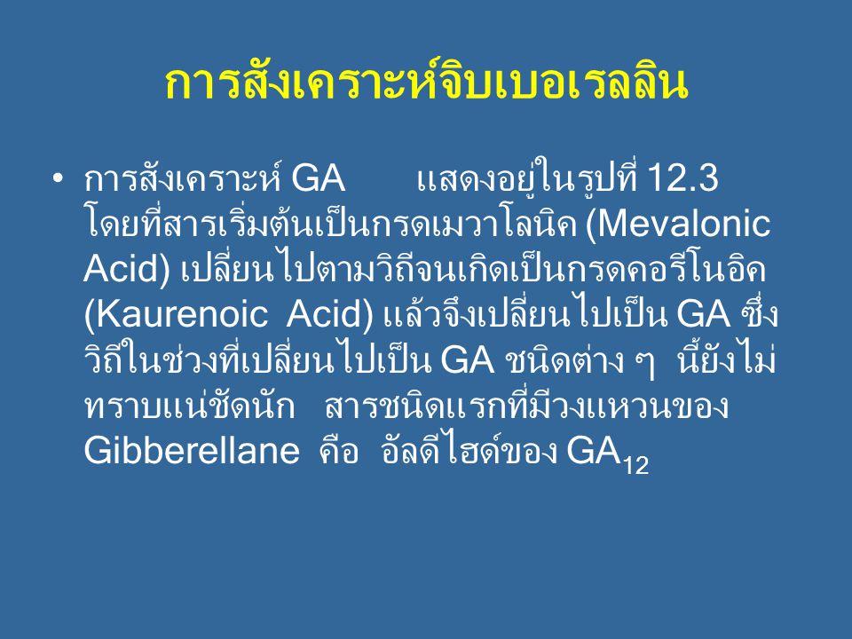 การสังเคราะห์จิบเบอเรลลิน การสังเคราะห์ GA แสดงอยู่ในรูปที่ 12.3 โดยที่สารเริ่มต้นเป็นกรดเมวาโลนิค (Mevalonic Acid) เปลี่ยนไปตามวิถีจนเกิดเป็นกรดคอรีโ