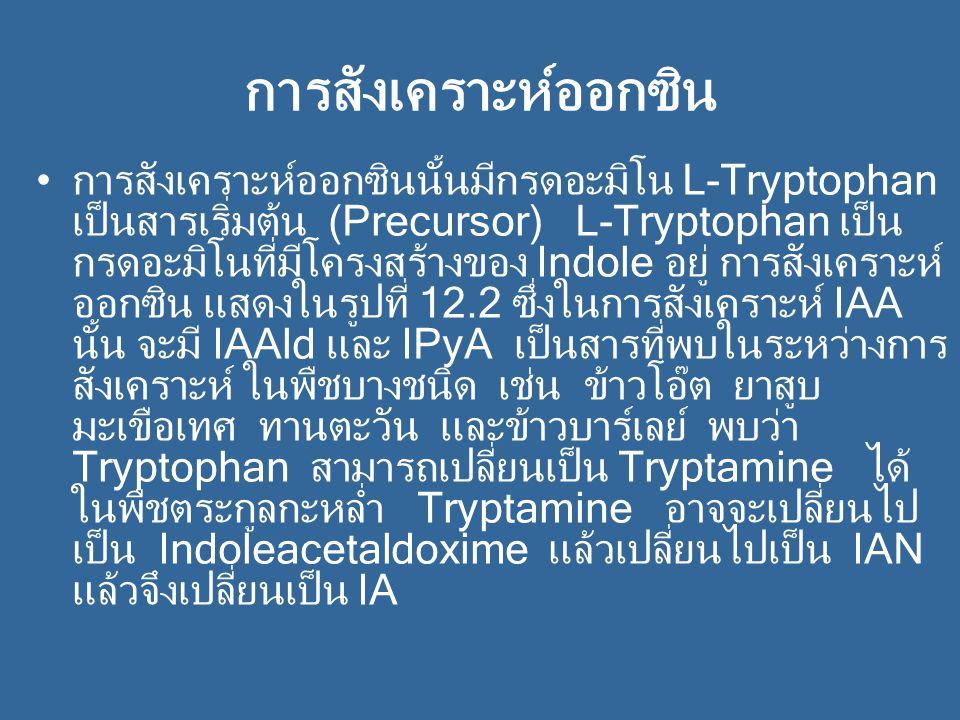 การสังเคราะห์เอทธิลีน การสังเคราะห์เอทธิลีนเกิดโดยที่เมทไธโอนีนจะ เปลี่ยนไปเป็น SAM (S-Adenosylmethionine) แล้วเปลี่ยนต่อไปเป็น ACC (1-aminocyclopropane- 1-carboxylic acid) แล้วจึงเปลี่ยนเป็นเอทธิลีน โดยที่ คาร์บอนอะตอมที่ 3 และ 4 ของเมทไธโอนีนจะ กลายเป็นคาร์บอนของเอทธิลีน ในการสังเคราะห์นี้ จะให้ก๊าซคาร์บอนไดออกไซด์ออกมาด้วย การ สังเคราะห์ เอทธิลีนจะหยุดชะงักเมื่อบรรยากาศขาด O 2 นอกจากนั้นยังมีสารระงับการสังเคราะห์เอทธิลีน ชนิดอื่นๆ อีก เช่น AVG (Aminoethoxy vinyl glycine)