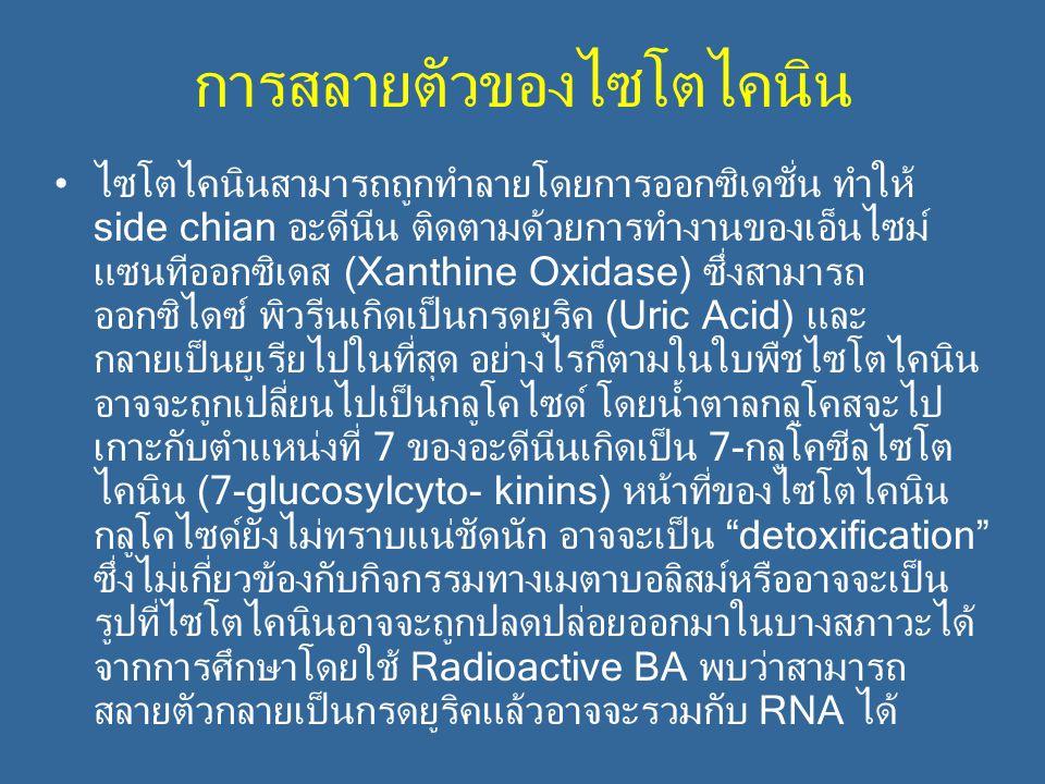 การสลายตัวของไซโตไคนิน ไซโตไคนินสามารถถูกทำลายโดยการออกซิเดชั่น ทำให้ side chian อะดีนีน ติดตามด้วยการทำงานของเอ็นไซม์ แซนทีออกซิเดส (Xanthine Oxidase