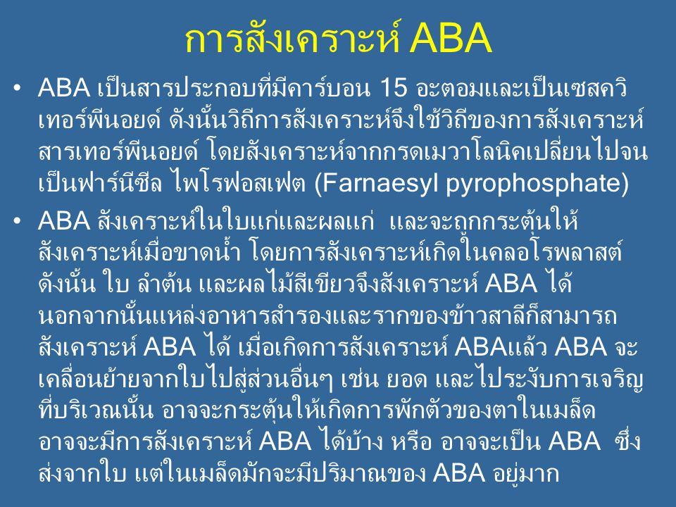 การสังเคราะห์ ABA ABA เป็นสารประกอบที่มีคาร์บอน 15 อะตอมและเป็นเซสควิ เทอร์พีนอยด์ ดังนั้นวิถีการสังเคราะห์จึงใช้วิถีของการสังเคราะห์ สารเทอร์พีนอยด์