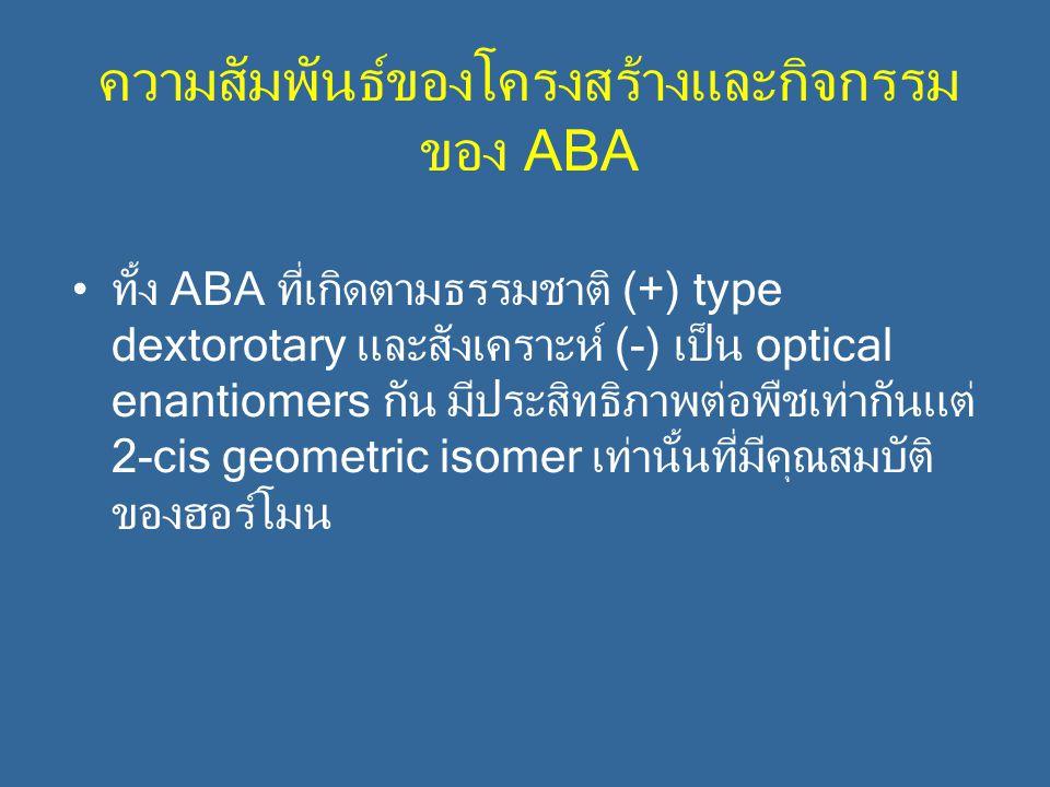 ความสัมพันธ์ของโครงสร้างและกิจกรรม ของ ABA ทั้ง ABA ที่เกิดตามธรรมชาติ (+) type dextorotary และสังเคราะห์ (-) เป็น optical enantiomers กัน มีประสิทธิภ
