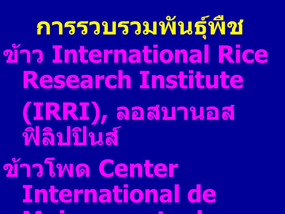 การรวบรวมพันธุ์พืช ข้าว International Rice Research Institute (IRRI), ลอสบานอส ฟิลิปปินส์ ข้าวโพด Center International de Mejoramento de Maize y Trigo