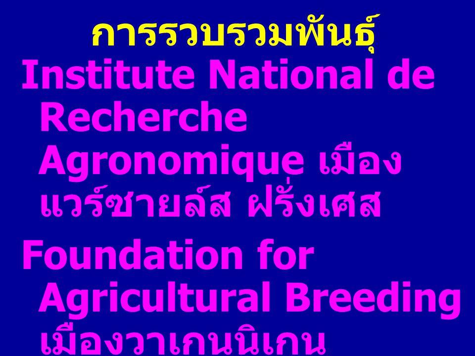การรวบรวมพันธุ์ Institute National de Recherche Agronomique เมือง แวร์ซายล์ส ฝรั่งเศส Foundation for Agricultural Breeding เมืองวาเกนนิเกน เนเธอร์แลนด