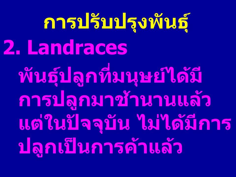 การปรับปรุงพันธุ์ 2. Landraces พันธุ์ปลูกที่มนุษย์ได้มี การปลูกมาช้านานแล้ว แต่ในปัจจุบัน ไม่ได้มีการ ปลูกเป็นการค้าแล้ว