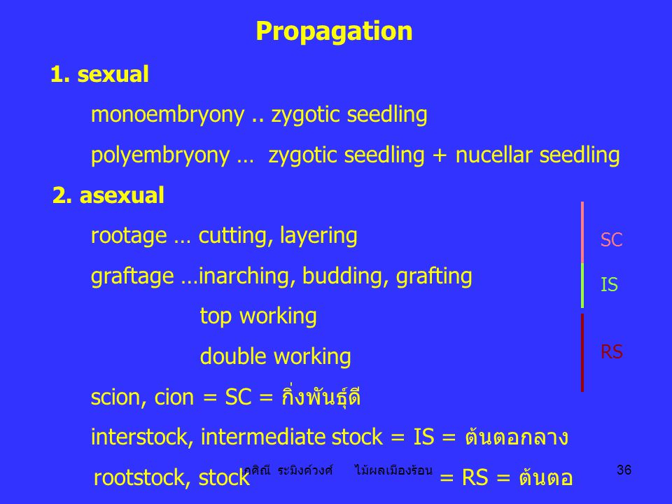 เกศิณี ระมิงค์วงศ์ ไม้ผลเมืองร้อน 36 Propagation 1. sexual monoembryony.. zygotic seedling polyembryony … zygotic seedling + nucellar seedling 2. asex