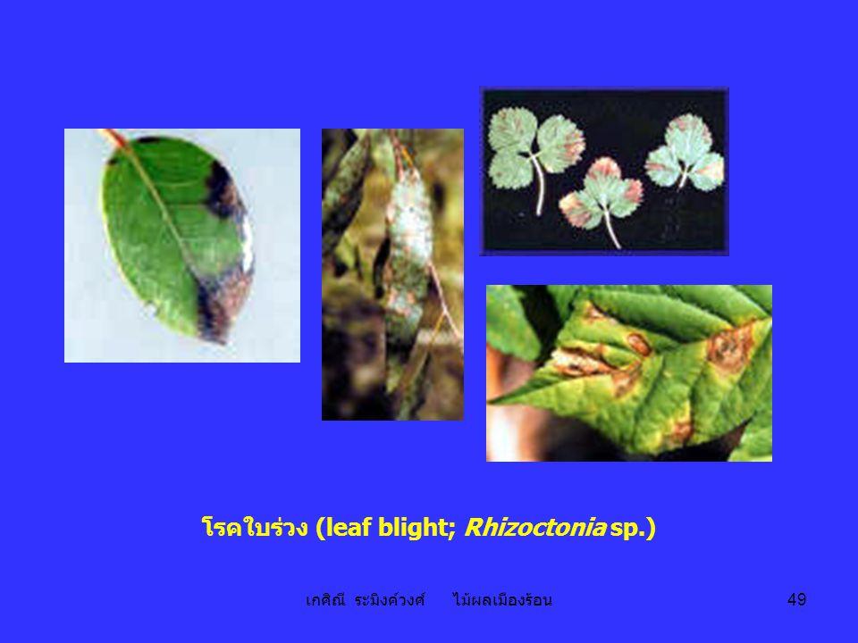 เกศิณี ระมิงค์วงศ์ ไม้ผลเมืองร้อน 49 โรคใบร่วง (leaf blight; Rhizoctonia sp.)