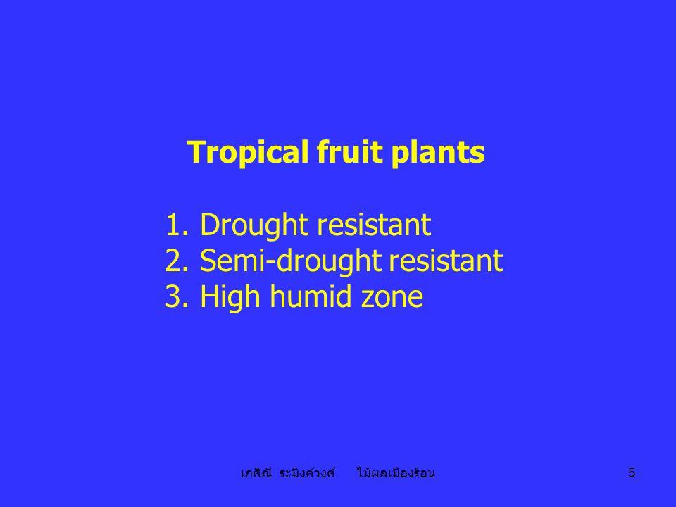 เกศิณี ระมิงค์วงศ์ ไม้ผลเมืองร้อน 5 Tropical fruit plants 1. Drought resistant 2. Semi-drought resistant 3. High humid zone