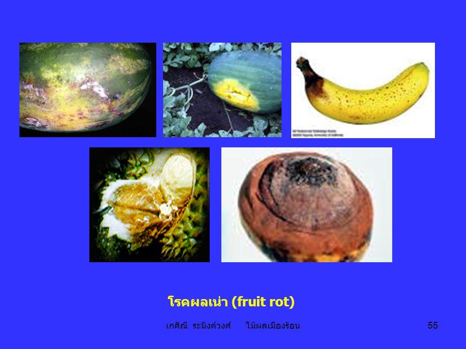 เกศิณี ระมิงค์วงศ์ ไม้ผลเมืองร้อน 55 โรคผลเน่า (fruit rot)