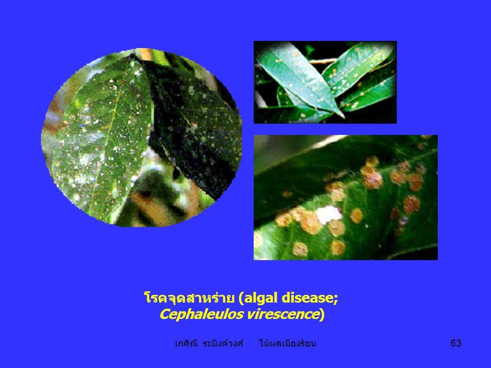 เกศิณี ระมิงค์วงศ์ ไม้ผลเมืองร้อน 63 โรคจุดสาหร่าย (algal disease; Cephaleulos virescence)