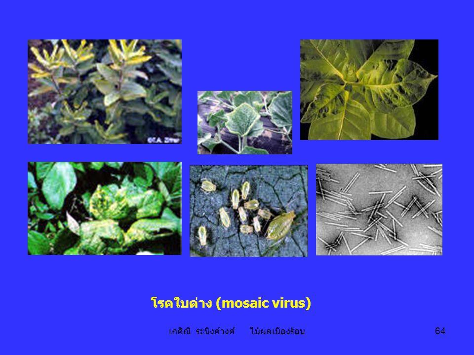 เกศิณี ระมิงค์วงศ์ ไม้ผลเมืองร้อน 64 โรคใบด่าง (mosaic virus)