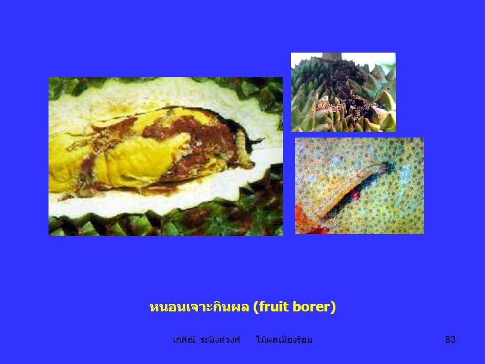 เกศิณี ระมิงค์วงศ์ ไม้ผลเมืองร้อน 83 หนอนเจาะกินผล (fruit borer)