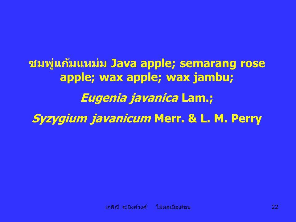 เกศิณี ระมิงค์วงศ์ ไม้ผลเมืองร้อน 22 ชมพู่แก้มแหม่ม Java apple; semarang rose apple; wax apple; wax jambu; Eugenia javanica Lam.; Syzygium javanicum M