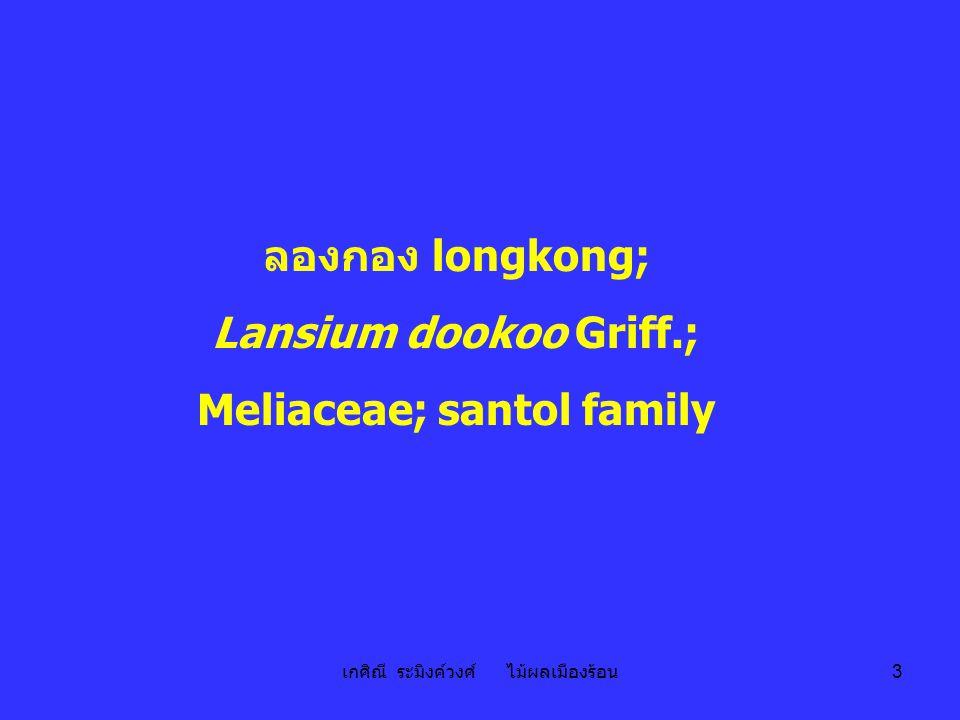 เกศิณี ระมิงค์วงศ์ ไม้ผลเมืองร้อน 3 ลองกอง longkong; Lansium dookoo Griff.; Meliaceae; santol family