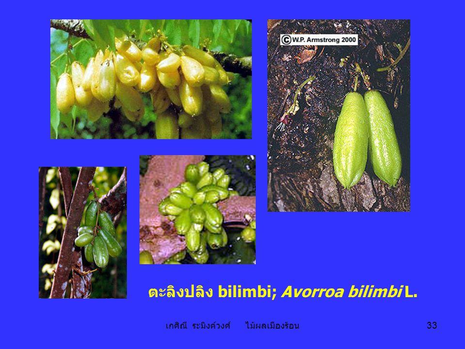 เกศิณี ระมิงค์วงศ์ ไม้ผลเมืองร้อน 33 ตะลิงปลิง bilimbi; Avorroa bilimbi L.