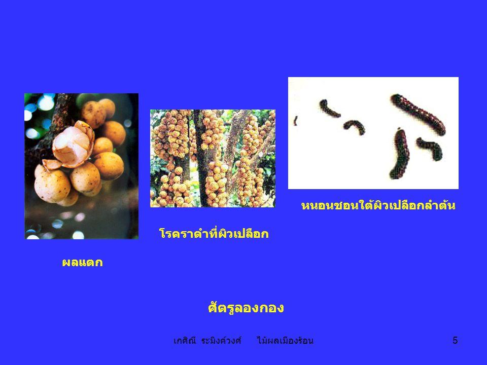 เกศิณี ระมิงค์วงศ์ ไม้ผลเมืองร้อน 36 ต้น กิ่งที่มีใบและดอก ดอก ใบ ผลแก่ เมล็ด