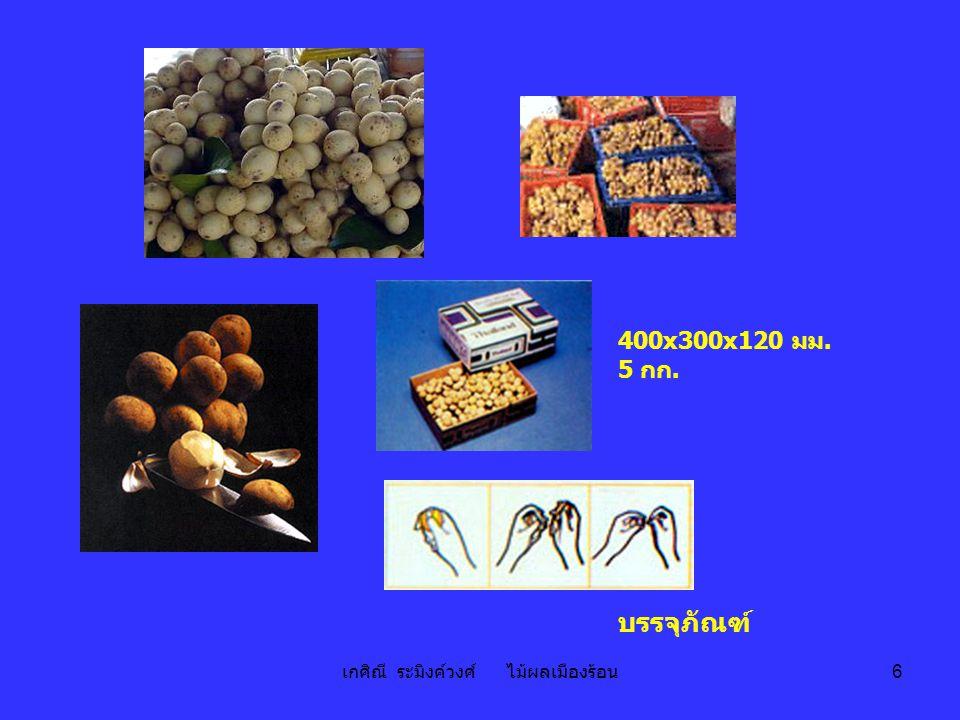 เกศิณี ระมิงค์วงศ์ ไม้ผลเมืองร้อน 27 ชมพู่แช่อิ่ม ชมพู่กวน ชมพู่สามรส ผลิตภัณฑ์