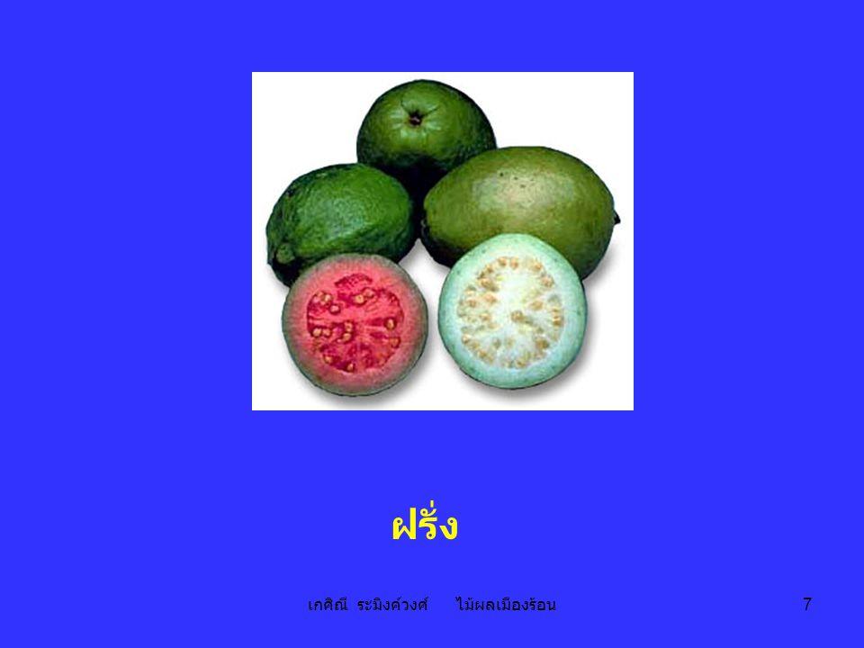 เกศิณี ระมิงค์วงศ์ ไม้ผลเมืองร้อน 8 ฝรั่ง guava Psidium guajava L. Myrtaceae; rose apple family