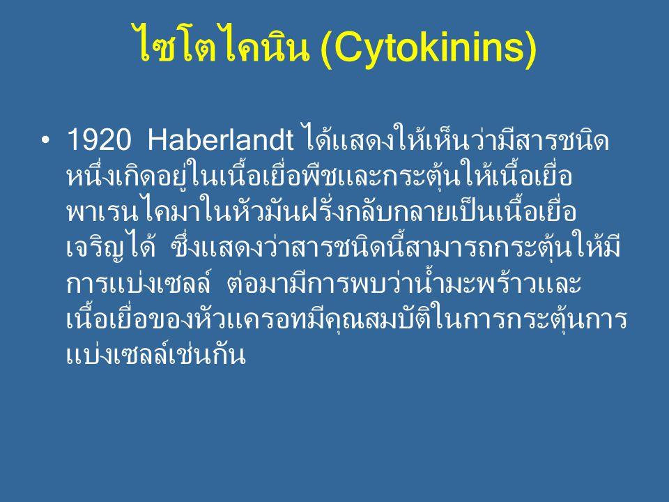 ไซโตไคนิน (Cytokinins) 1920 Haberlandt ได้แสดงให้เห็นว่ามีสารชนิด หนึ่งเกิดอยู่ในเนื้อเยื่อพืชและกระตุ้นให้เนื้อเยื่อ พาเรนไคมาในหัวมันฝรั่งกลับกลายเป