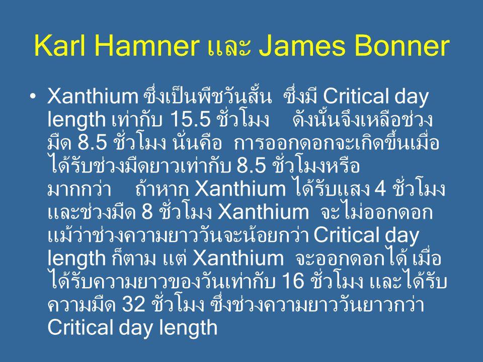 Karl Hamner และ James Bonner Xanthium ซึ่งเป็นพืชวันสั้น ซึ่งมี Critical day length เท่ากับ 15.5 ชั่วโมง ดังนั้นจึงเหลือช่วง มืด 8.5 ชั่วโมง นั่นคือ ก