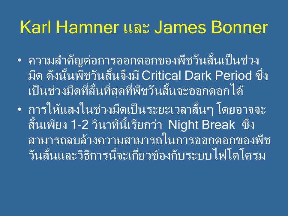 Karl Hamner และ James Bonner ความสำคัญต่อการออกดอกของพืชวันสั้นเป็นช่วง มืด ดังนั้นพืชวันสั้นจึงมี Critical Dark Period ซึ่ง เป็นช่วงมืดที่สั้นที่สุดท